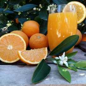 Naranjas Zumo Medio 20kg