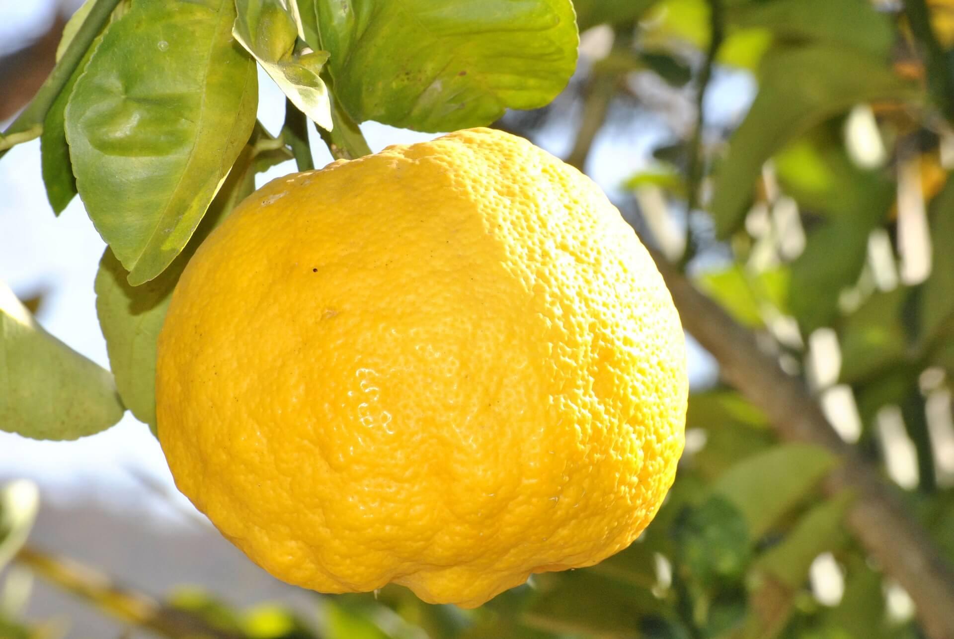 Limón serrano